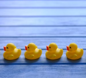 image of rubber ducks lined up in a row